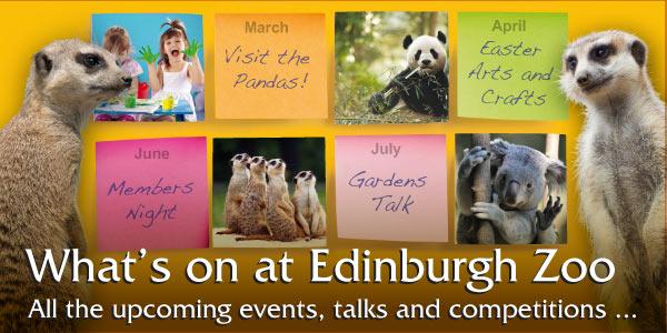 Whats On Edinburgh Zoo
