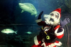 Scuba Diving Santa Claus and Sand Tiger Shark at Deep Sea World