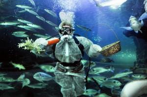 Deep Sea World's Diving Easter Bunny (2)-1
