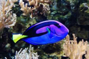 Life Story of a Filmstar Fish