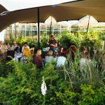 LAURA MEEK_garden (1)
