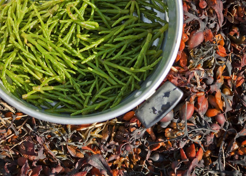 Wedgwood Wild Food Foraging Experience