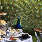 Prestonfield-House-Afternoon-Tea-